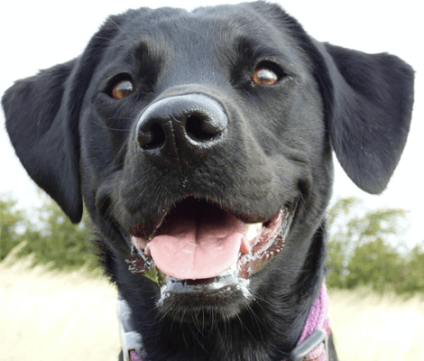 Lola The Office Dog